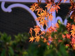 2019庐山金秋赏枫节——火红的新时